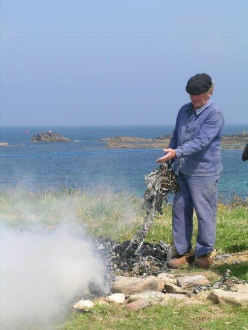 Une fois sèches, les algues étaient brûlées pour en faire de la soude qui était livrée aux usines pour en extraire l'iode.