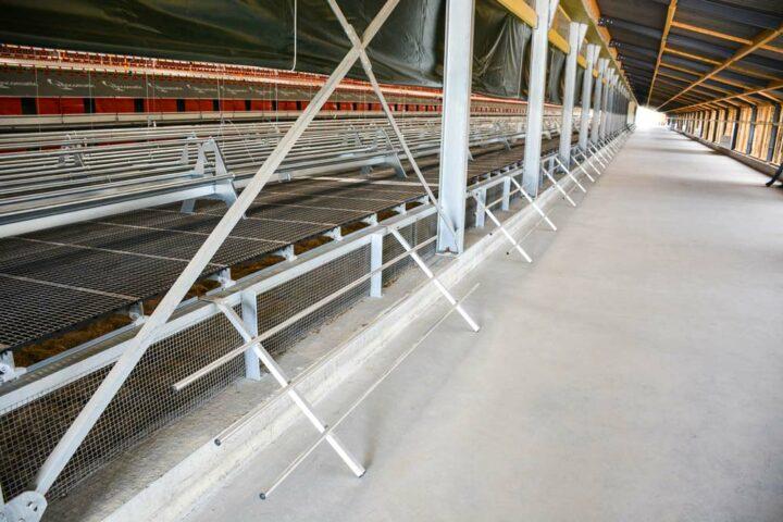 Les échelles facilitent le passage des poules de la salle d'élevage vers le jardin d'hiver.