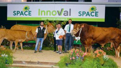 Photo of Limousine au Space 2018 : Hôtesse reçoit le prix de Meilleur animal