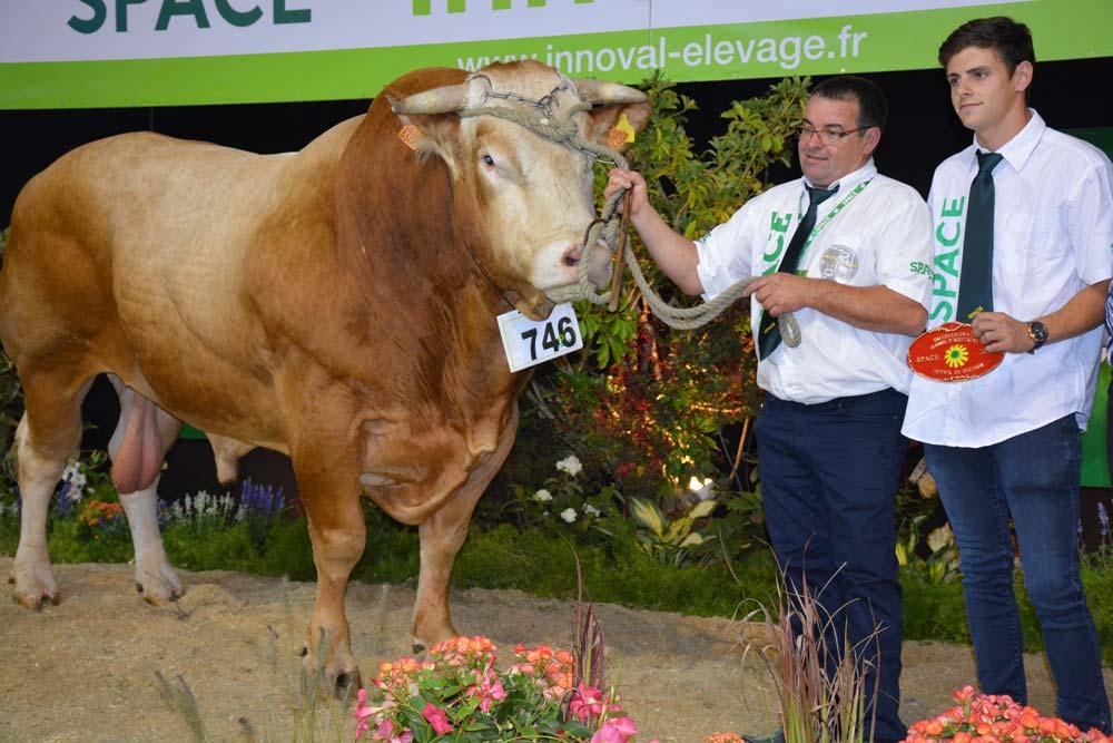 Très massif, Ivan, de l'EARL Robin Picard à Caro, avait déjà terminé Champion mâle à Paris.
