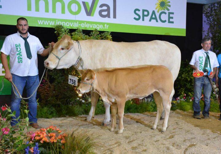 Judith, première des « vaches suitées de plus de 3 ans », de l'EARL de La Moulière.