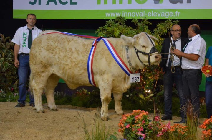 Laforêt de l'élevage d'Alain Pété en Vendée, Championne femelle.