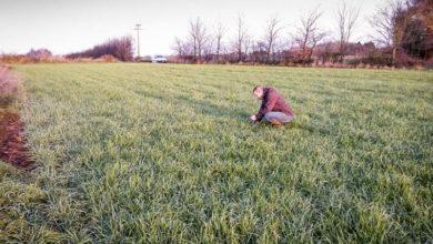 Photo of Céréales d'automne : plus de vigilance et d'agronomie