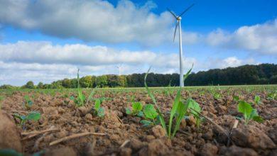Photo of Semences contaminées : 10000 ha supplémentaires de colza détruits