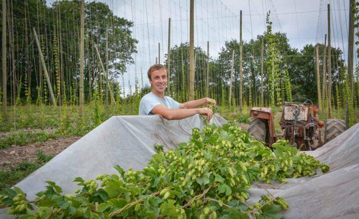 À la récolte, Romain Chemin coupe les lianes avec leur fil tuteur.