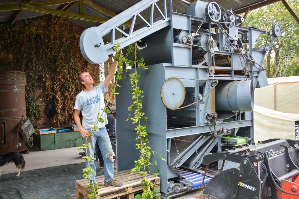 Pour séparer les cônes de houblon, des feuilles et de la liane, Romain Chemin les passent dans une trieuse.