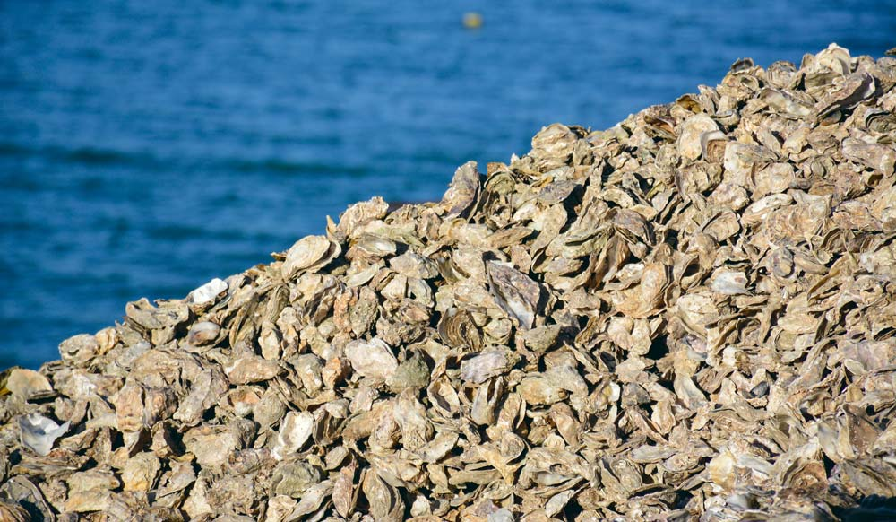 Un traçage pointu de l'origine des contaminations bactériologiques fécales dans les huîtres est un enjeu pour la filière.