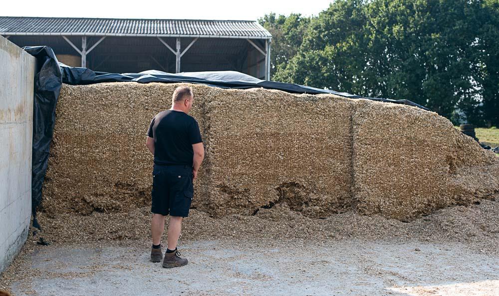 Entre 1,1 ha récolté le 23 août en urgence et les 35 t d'ensilage de l'année dernière achetées, un silo équivalent à 4 ha de maïs a été confectionné pour faire la jonction jusqu'à l'ensilage qui devrait intervenir juste après la mi-septembre.