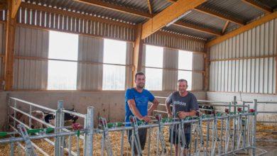 Photo of Bâtiment en élevage laitier : le confort d'abord