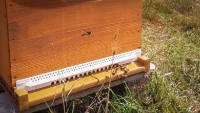 Photo of Apiculture : dernière ligne droite de la saison, la mise en hivernage