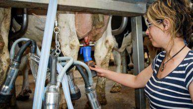 Photo of L'agriculture manque de bras et de têtes