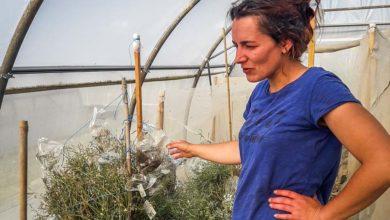 """Photo of Agriculture biologique : """"Il nous faut des semences pour fournir le marché"""""""