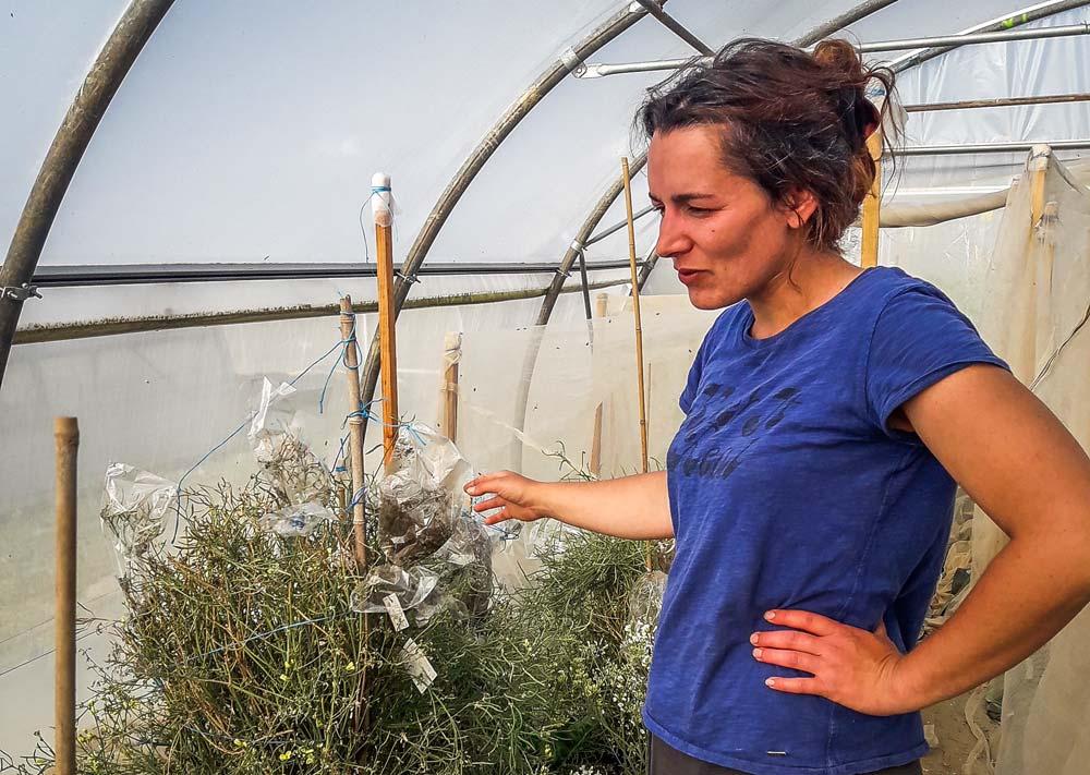 Émilie Souchet est en charge de la multiplication chez Biobreizh. « Je travaille de façon artisanale, mais cela fonctionne », explique-t-elle.