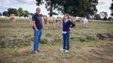 Photo of Pertes de veaux : Mise en place d'une vaccination cet automne