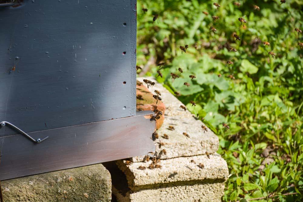 abeille-apiculture