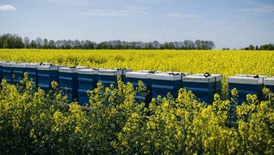 Photo of Apiculture et agriculture : comment les rapprocher ?
