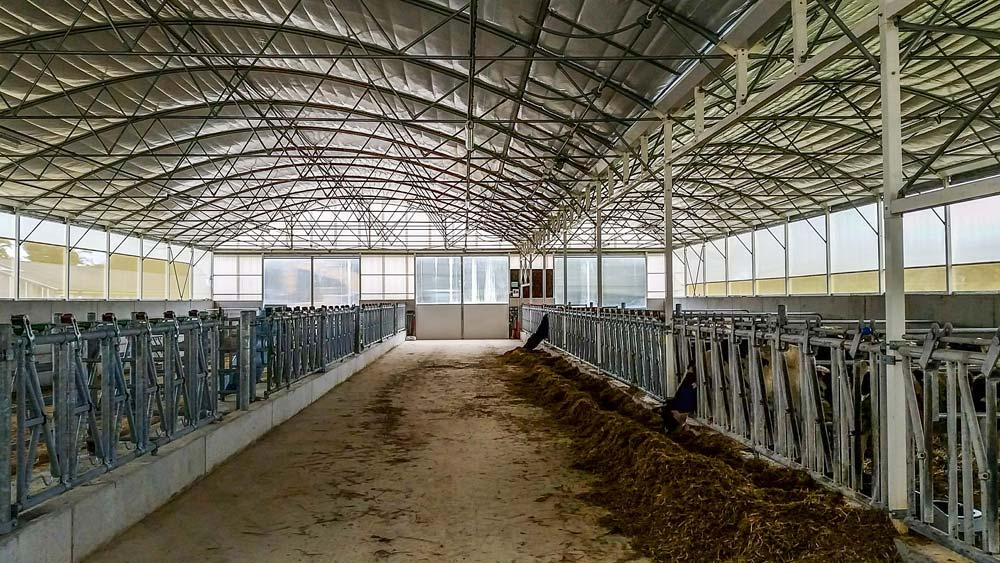 Le bi-tunnel génisses de 700 m2 présente 80 places au cornadis.