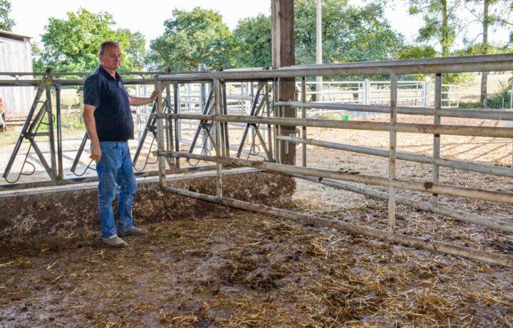 «Dans cette case, nous avons la possibilité de bloquer les vaches au cornadis, avec deux barrières sur les côtés qui permettent les interventions», montre Philippe Lehuger.