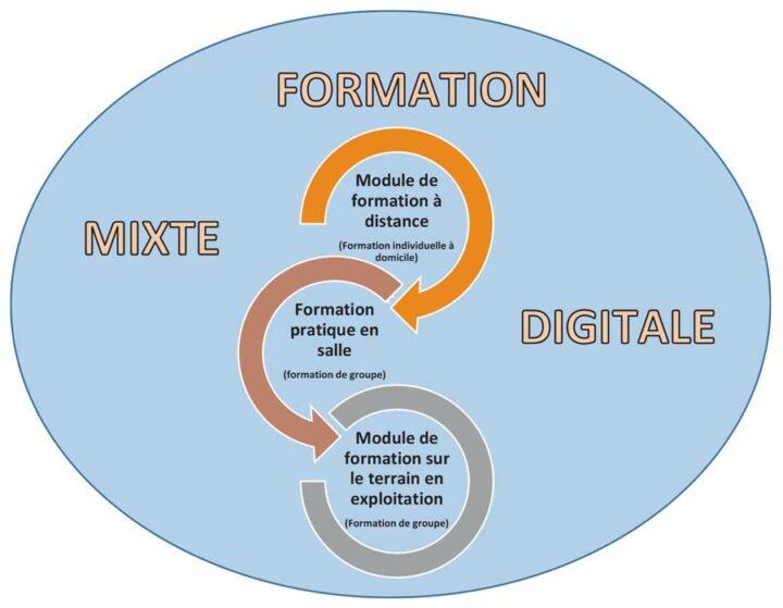 Exemple de formation mixte digitale