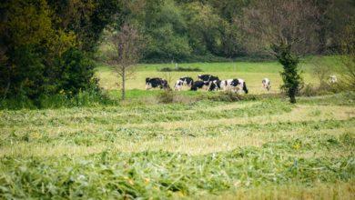 Photo of Une pousse d'herbe de printemps en baisse