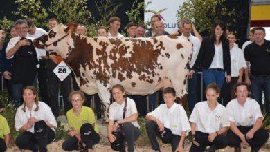 Photo of Ohhh la vache : les concours