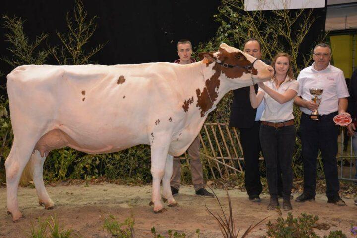 Irise (Parma sur Kilian), grande championne, a produit, en 2e lactation, 8040 litres à 37 de TB et 33,8 de TA.