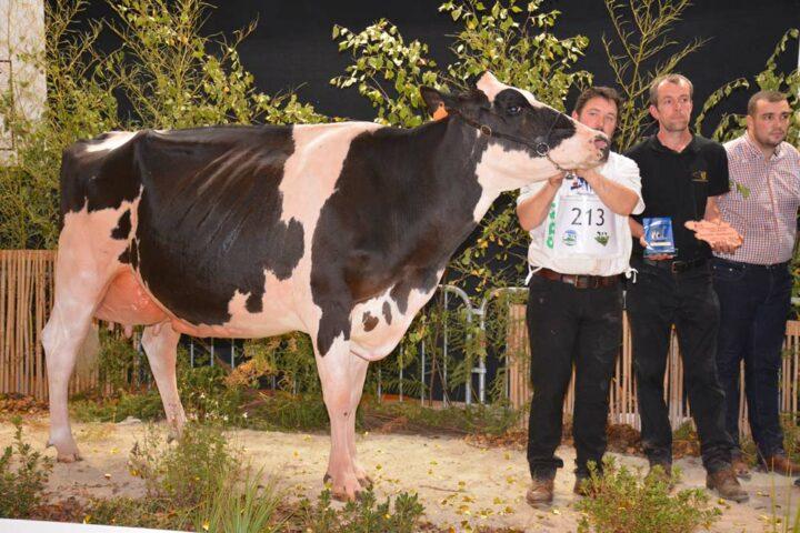 Inessa (144 d'Isu), championne adulte, au Gaec Toullec de Plomelin, a produit, en 3e lactation, 11 064 litres à 40 de TB et 31,7 de TA.