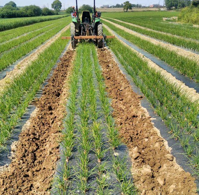 Le binage entre les planches est facile et précis grâce à l'équipement GPS installé sur le tracteur.