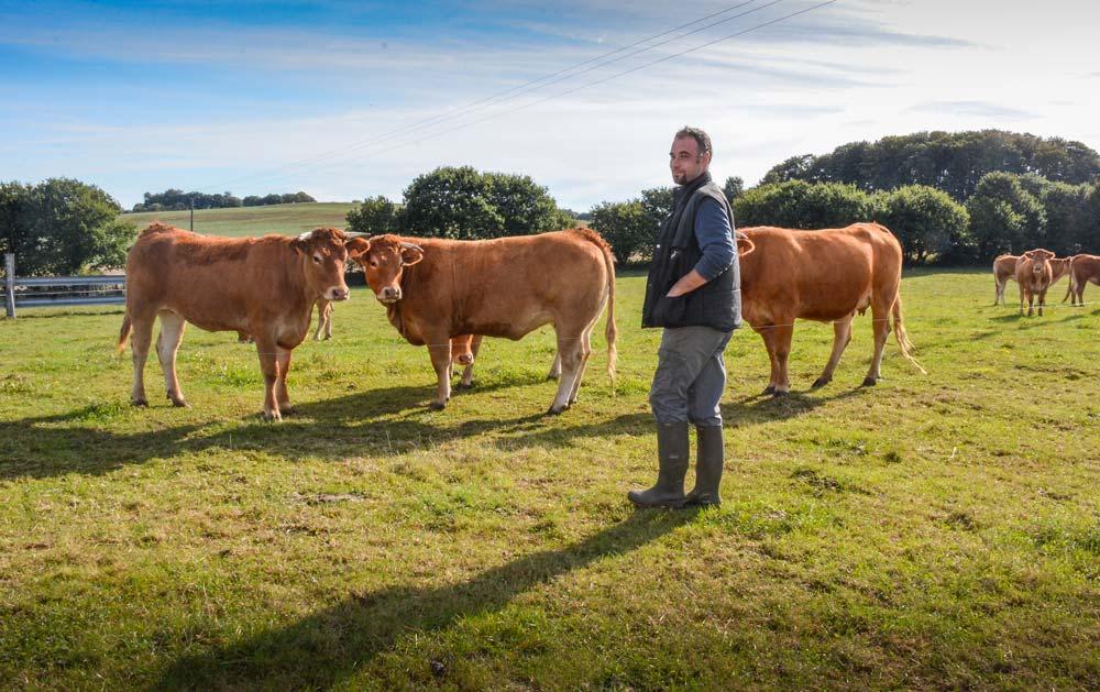 « À l'automne, j'intègre quelques vaches avec leurs veaux dans le lot des génisses pour qu'elles apprennent de leurs aînées… », explique Mickaël Dossal.