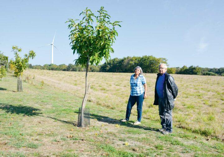 Hervé Ménager et Marie-Claire Jégouic, président et vice-présidente du Comité interprofessionnel du marron de Redon, devant un des jeunes châtaigniers plantés par cette dernière.