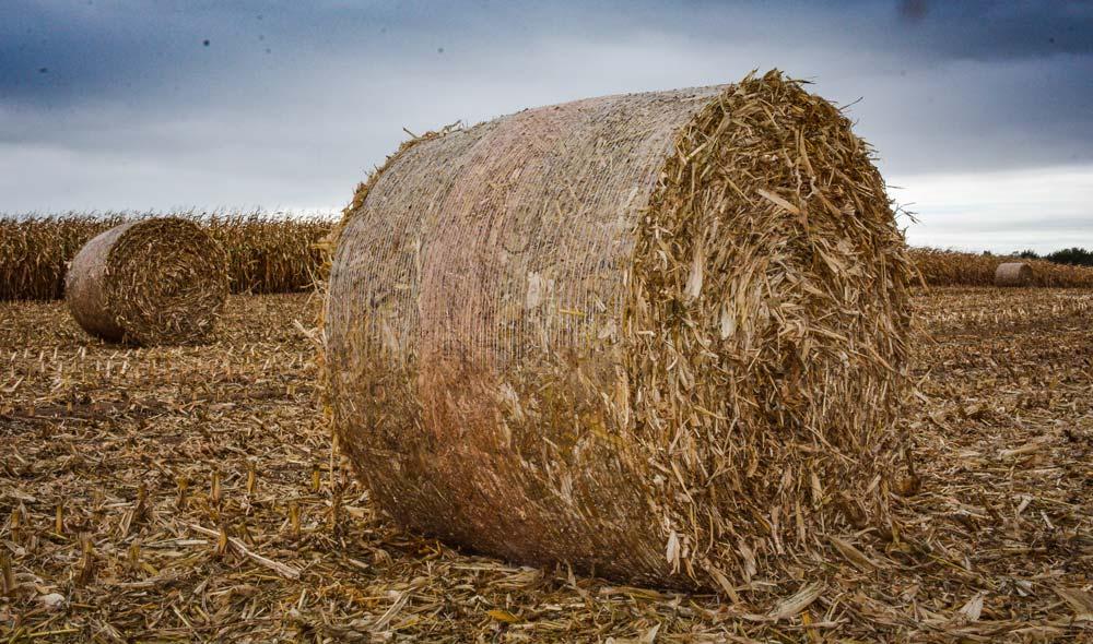 28 rounds de cannes de maïs ont été récoltées sur 4 ha, après une semaine de séchage au sol.