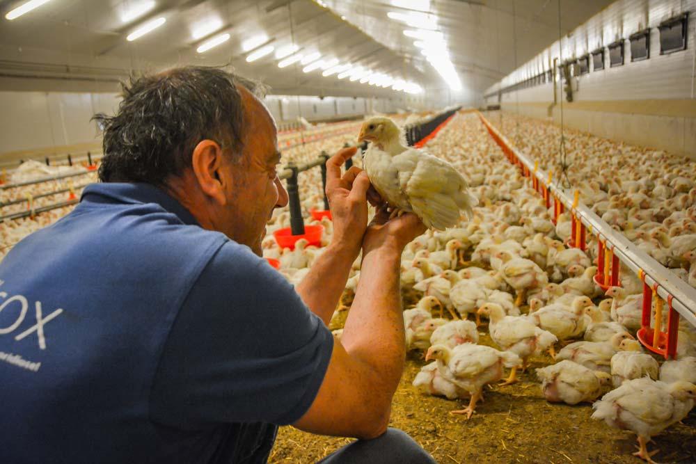Le nombre d'animaux présents dans des fermes ne laisse plus de temps à l'éleveur de poser son regard sur l'animal individuel.