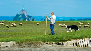 """Photo of """"L'agneau de pré-salé, un atout pour le territoire"""""""
