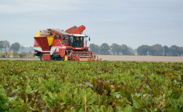 Les récoltes réalisées par l'ETA s'étalent de mi-octobre à fin novembre.