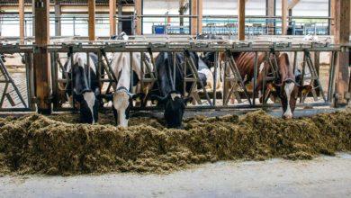 Photo of Mieux connaître les autres acteurs de l'Europe laitière