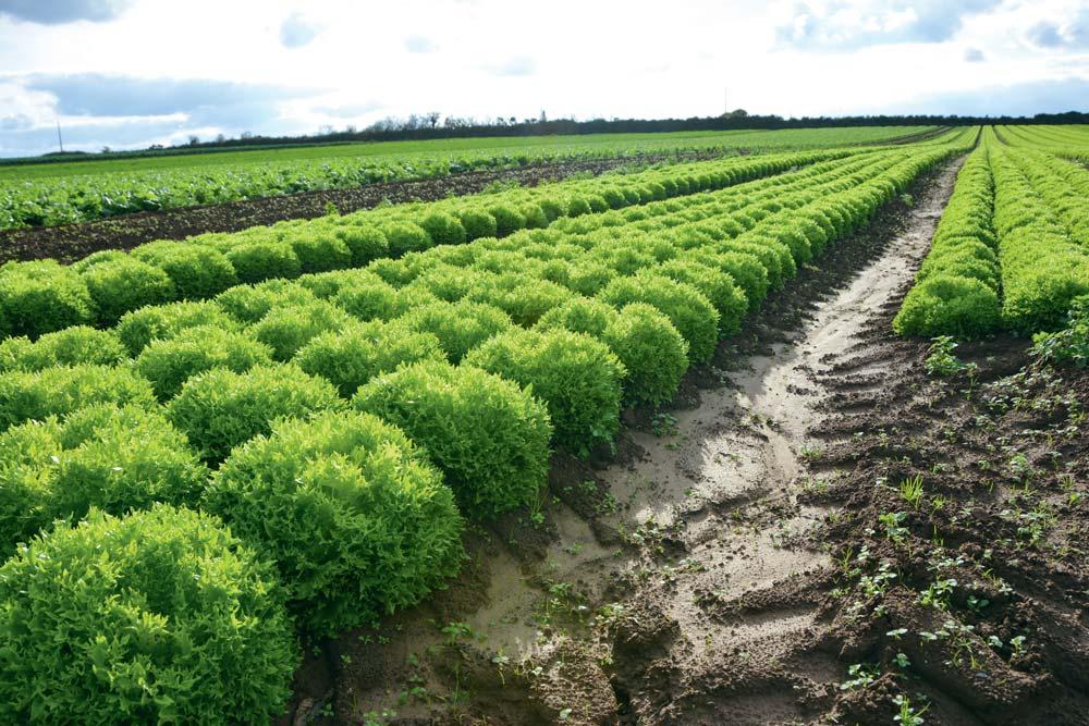 Le groupe Dephy mis en place a un objectif de réduction de l'IFT moyen de 27 % d'ici à 2020. Il rassemble 12 producteurs du Finistère.