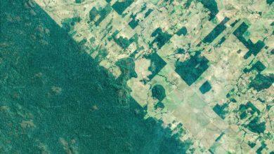 """Photo of L'agriculture est """"l'un des principaux moteurs"""" du déclin de la biodiversité, selon WWF"""