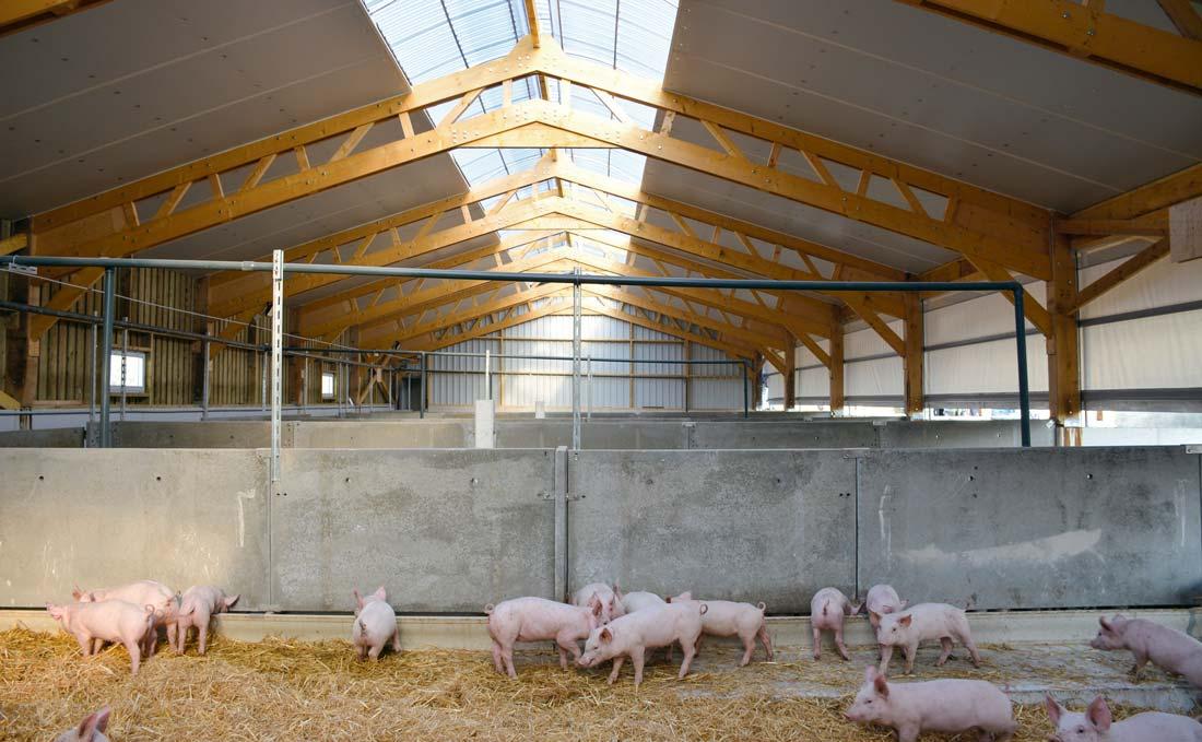 Le bâtiment est large de 12 mètres entre les poteaux (sans la courette extérieure). Une trentaine de porcs sont élevés par case.