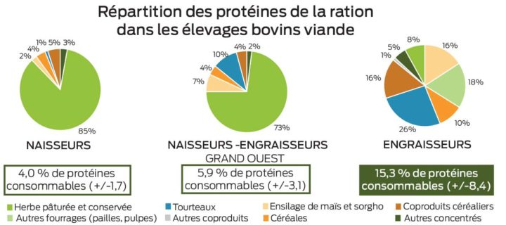 repartition-proteines-ration-viande-bovine