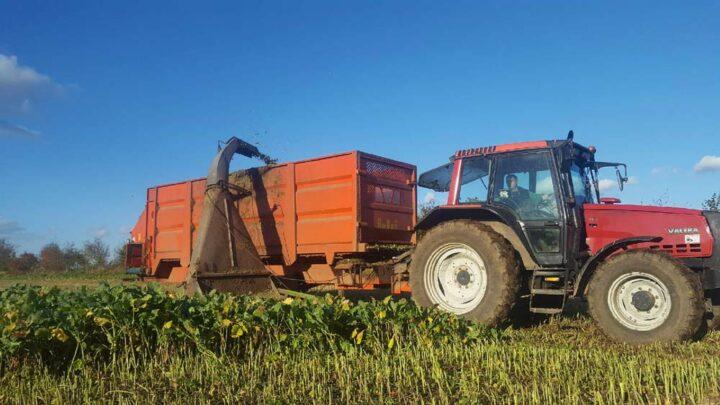 Les éleveurs ont commencé par un affouragement de colza fourrager en hiver. Aujourd'hui la ration comporte également un mélange de RGA, trèfle blanc et trèfle violet en été.