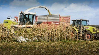 Photo of Quelle variété choisir pour l'ensilage de maïs épi ?