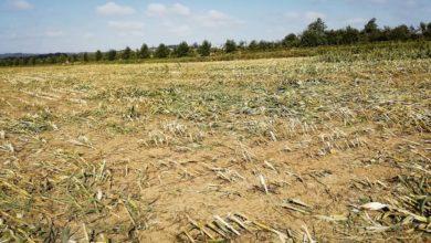 Photo of La FNSEA salue «l'approche raisonnable» du Giec dans son rapport sur les sols