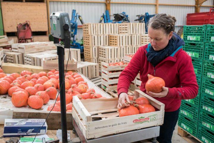 Certains légumes sont stockés sur site et séchés grâce à une soufflerie pour une conservation optimale avant commercialisation. Au total, l'atelier produit 12 légumes différents dont les potimarrons.