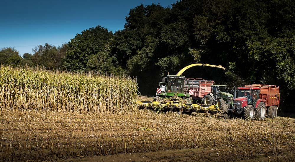 Dans un contexte de réchauffement climatique, l'herbe en Bretagne devrait bénéficier d'une pousse précoce et vigoureuse en sortie d'hiver. Mais son développement annoncé difficile en été fera du maïs une plante fourragère bien adaptée aux enjeux alimentaires des exploitations laitières.