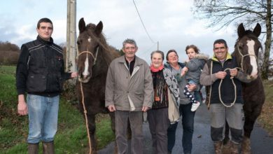 Photo of Le cheval breton fait partie de la famille