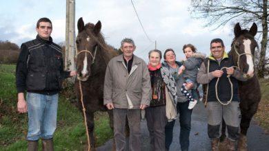 Photo of Le cheval breton fait partie de la famille