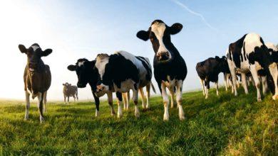 Photo of Nouveaux repères en grands troupeaux