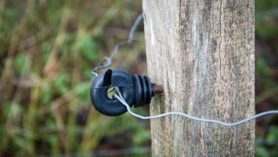 Photo of Entretenir les clôtures