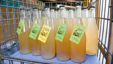 Photo of Le sapin pique aussi en limonade