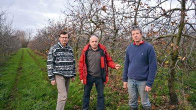 Photo of Des producteurs de pommes vent debout contre le prosulfocarbe